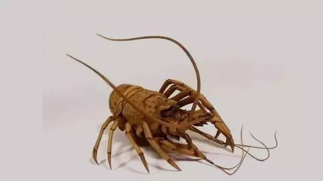 【木作欣赏】一只每一个关节都能活动的龙虾-手工记木